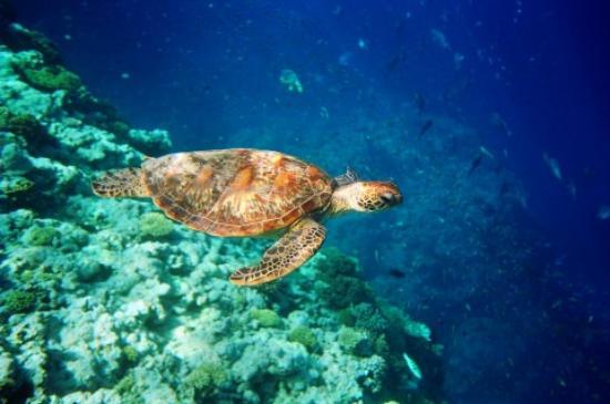 islas columbretes corales blancas